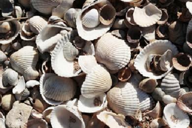 Kruipruimte isoleren met schelpen